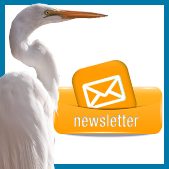 newsletter-featured-image