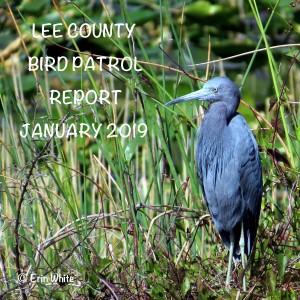 Bird Patrol Report, Lakes Regional Park, Fort Myers, FL