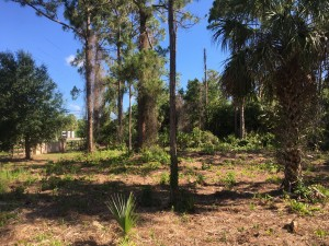 May, 2019: gopher tortoise habitat at Lakes Park with new growth, north