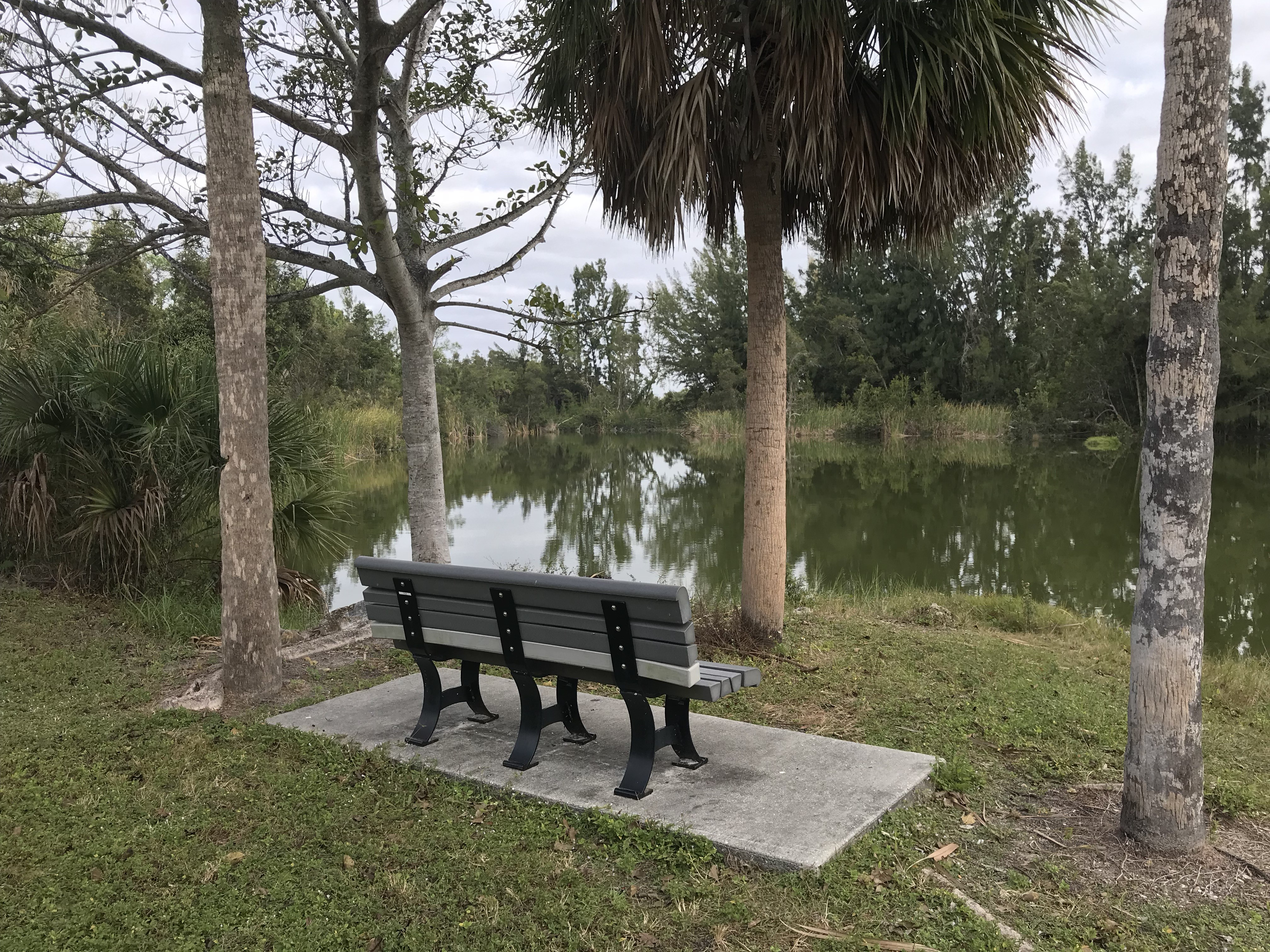 Bench awaiting dedication in Lakes Park, Fort Myers Florida
