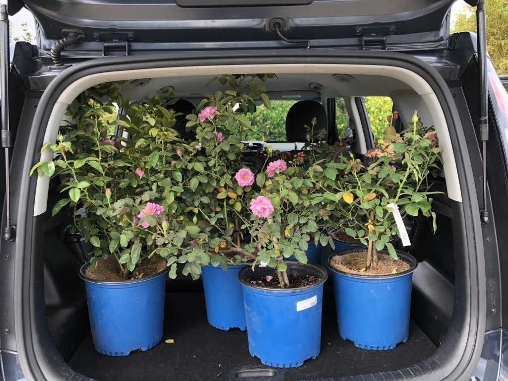 Kathy Busick and Ann Krull went rose bush shopping with our friends at Riverland Nursery