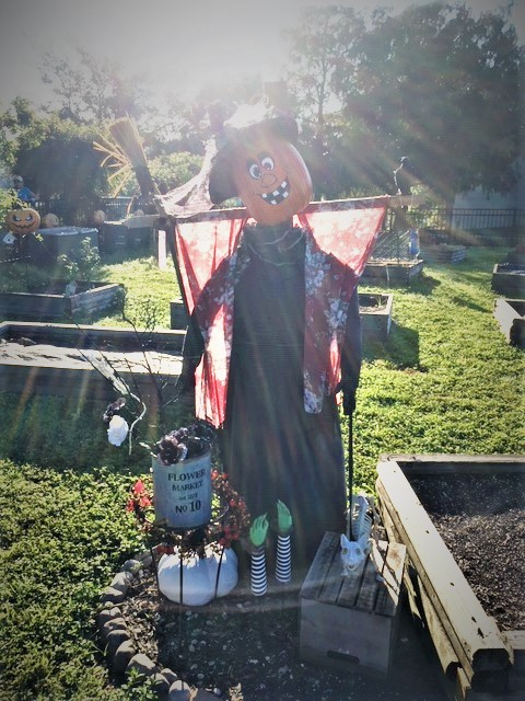 Scarecrow in the Community Garden at Lakes Park