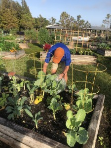 Collecting produce for the Community Cooperative