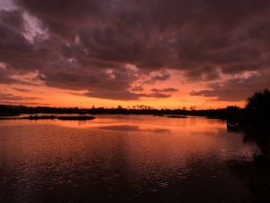 Sunset in Lakes Park, Fort Myers Florida by Toni Ferrell
