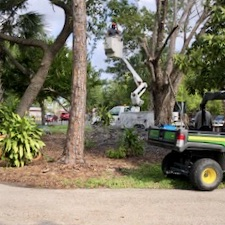 A bucket truck begins the sad task of taking down the grand old elm tree in the Children's Garden at Lakes Park