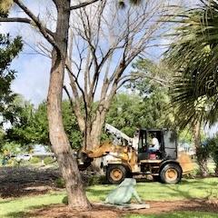 Arborists prepare to take down the grand old elm in the Children's Garden