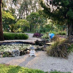 Volunteers work on making the Japanese water garden feature in the Lakes Park Botanic Garden all neat and pretty
